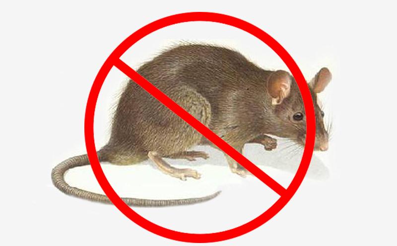 办公室灭鼠,眉山灭鼠公司有方法