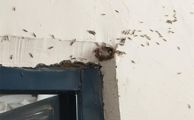 2020年五月,仁寿灭除白蚁成功案例