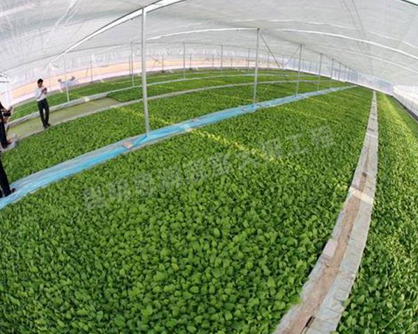 蔬菜育苗大棚