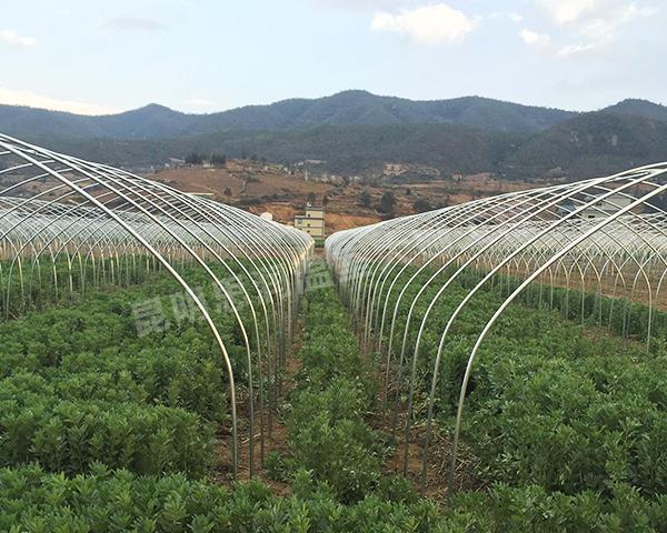 农业温室大棚搭建