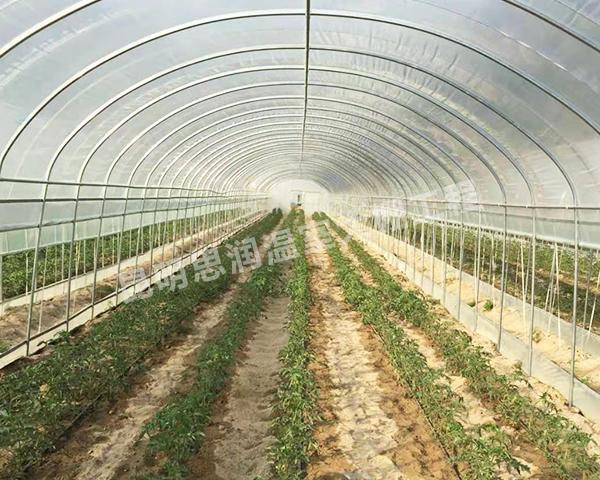 蔬菜插地大棚