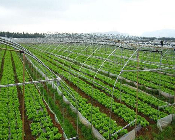 种蔬菜大棚建设