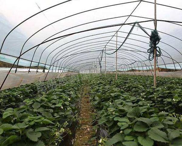 大理蔬菜大棚建造公司