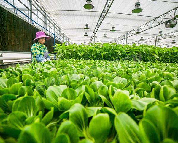 迪庆蔬菜大棚建造公司在设计蔬菜大棚时有哪些标准?