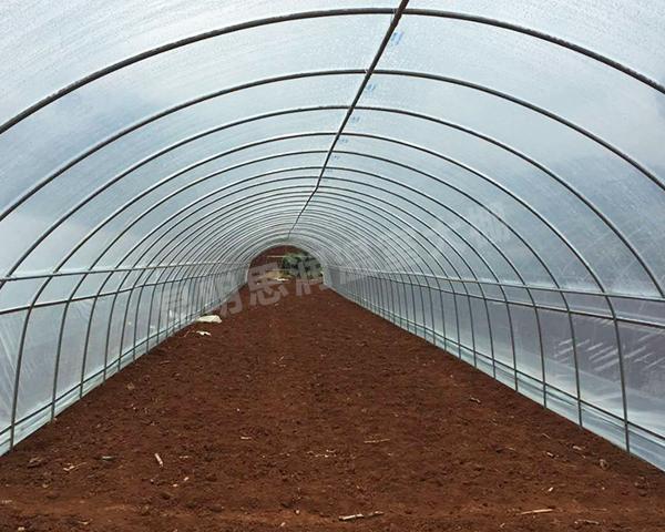 香菇养殖大棚