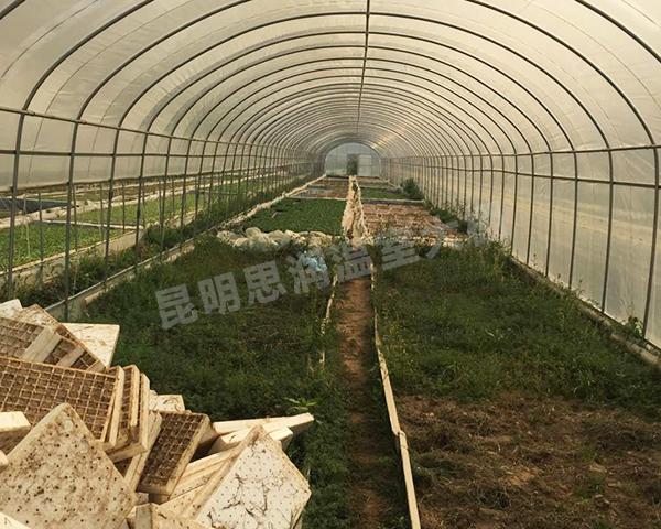 野生菌种植温室大棚