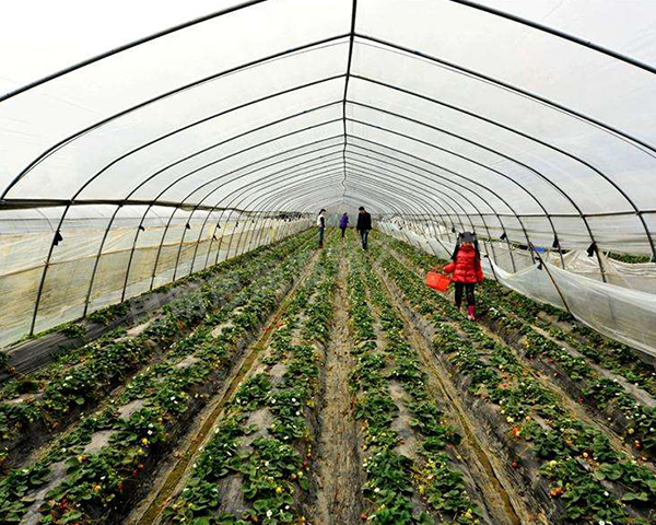 昆明蔬菜大棚厂家