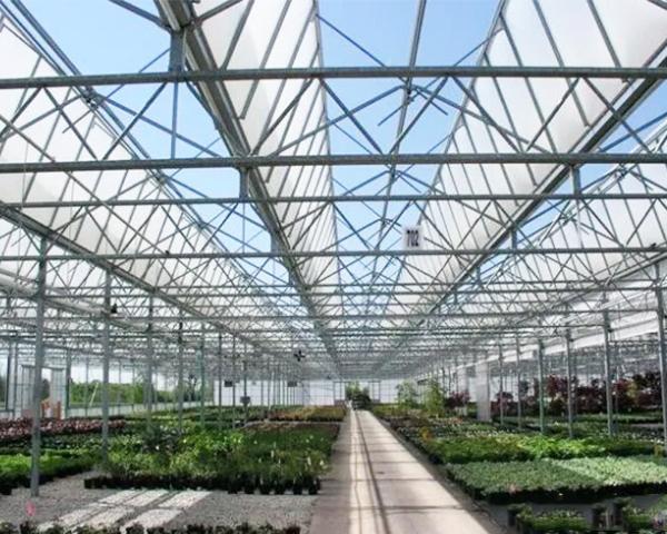 「日光温室大棚」日光温室大棚特点、一亩造价多少?