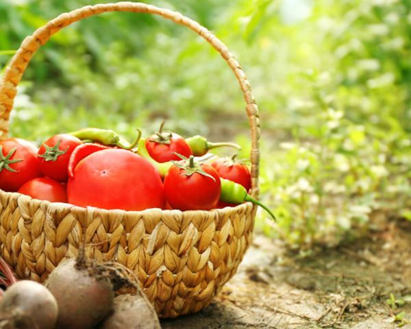 云南温室蔬菜大棚厂家
