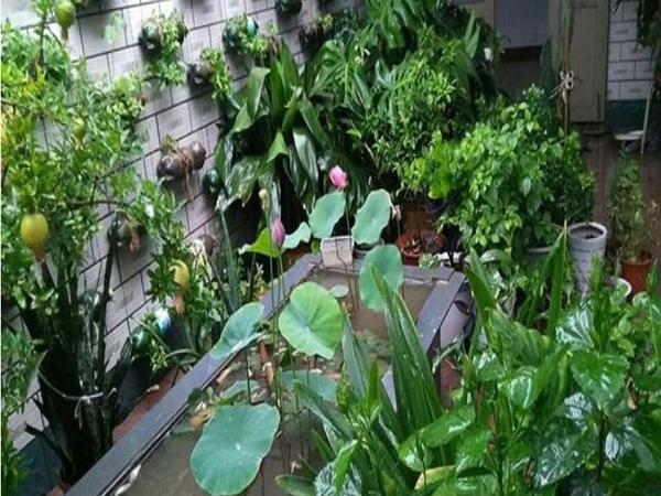 花园打造装修