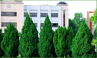 白皮松苗木的价格是由哪些因素来决定? 养护知识 第1张