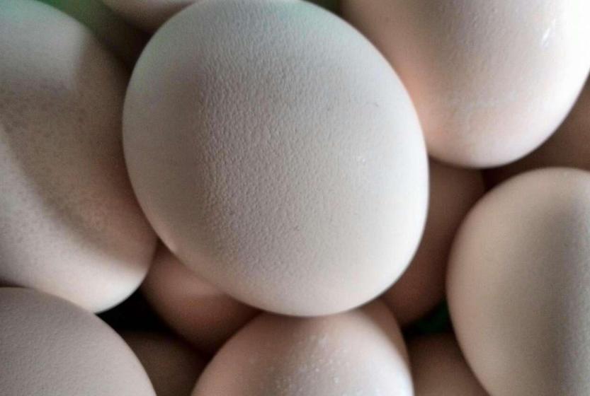 食用孔雀蛋