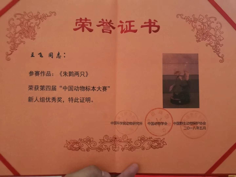 中国动物标本大赛证书
