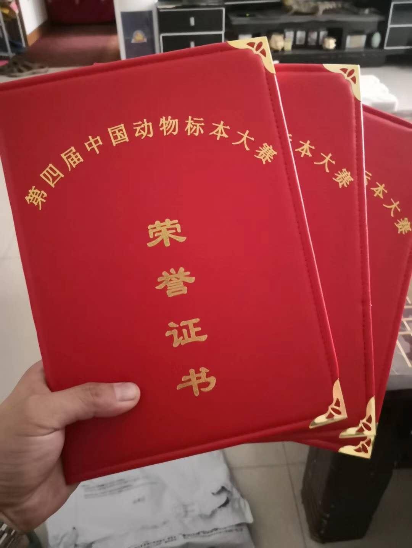 孔雀标本荣誉证书