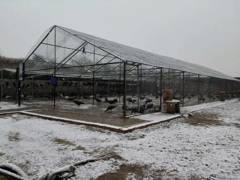 陕西专业孔雀养殖基地