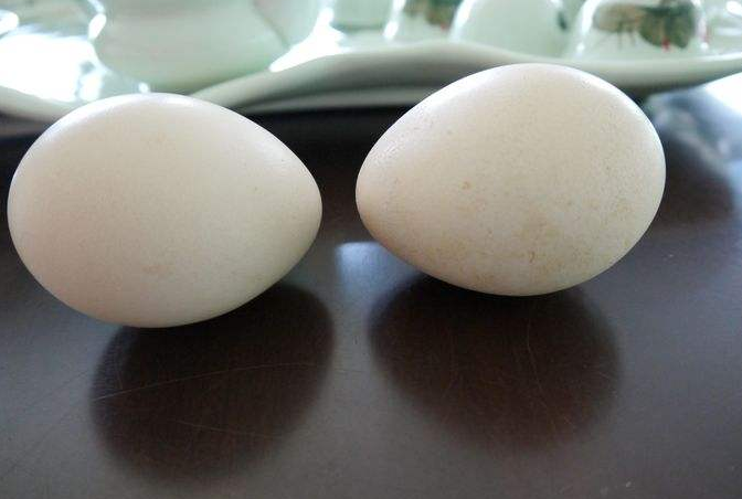 陕西孔雀蛋价格