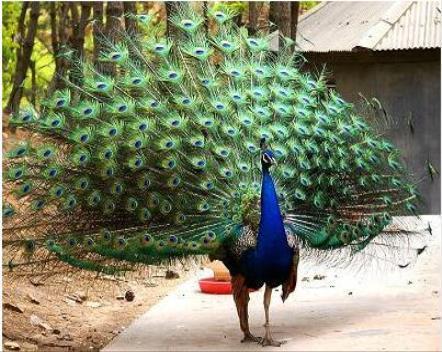 陕西孔雀展览