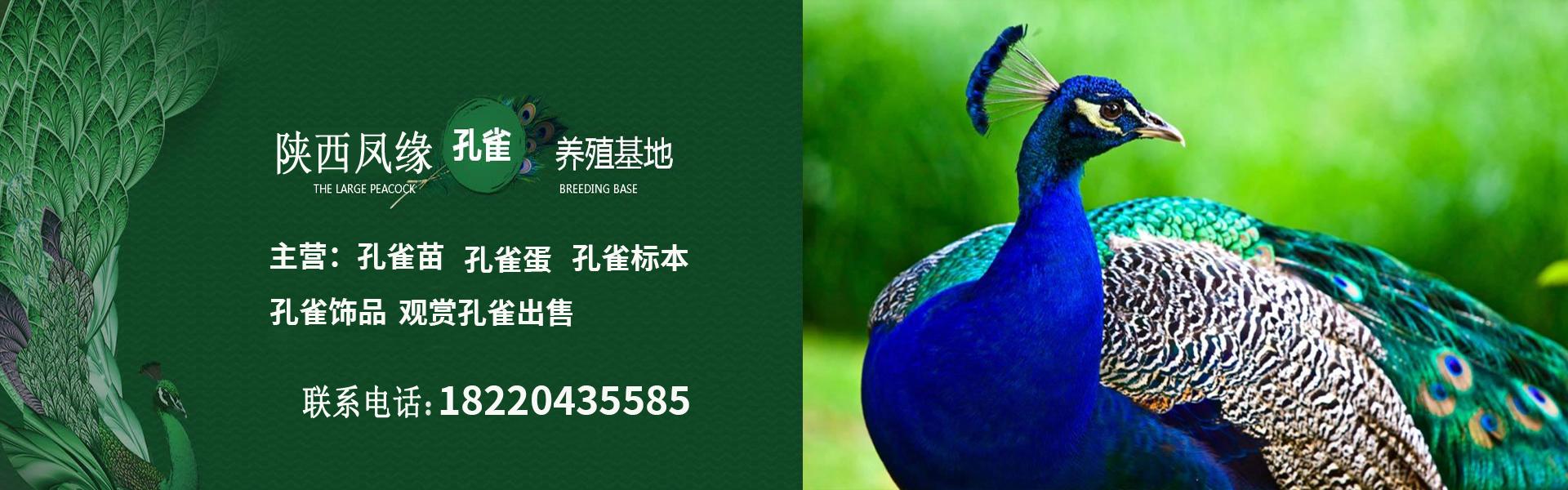 陕西孔雀养殖场
