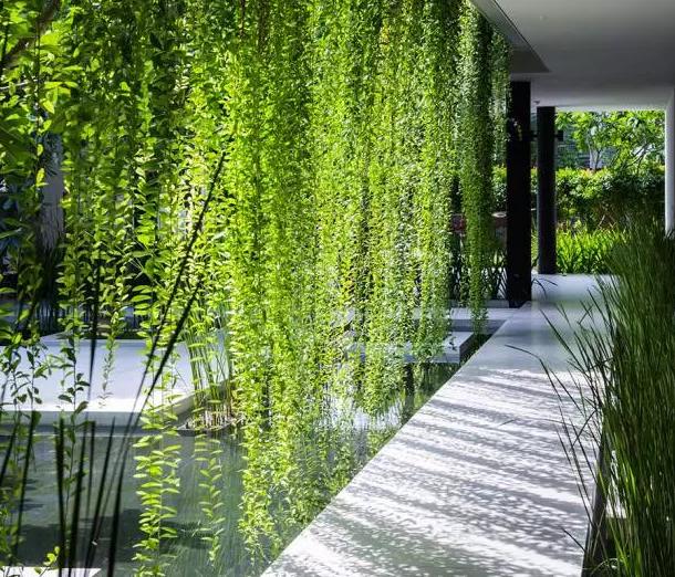 植物墙绿化到底能改变什么