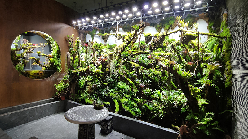 雨林缸造景
