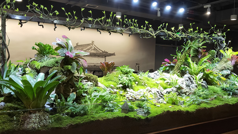 热带雨林缸