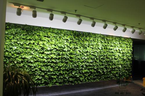 【植物墙】你知道选择植物墙植物要遵循的哪些原则吗