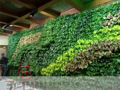 湾流室内植物墙养护