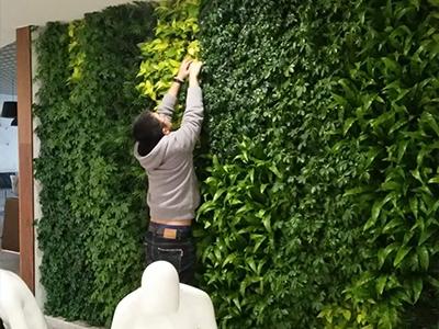 郭南建材城室內植物墻養護