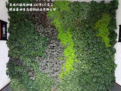 宝鸡北坡植物墙