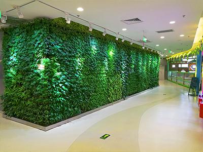 大话南门绿植墙