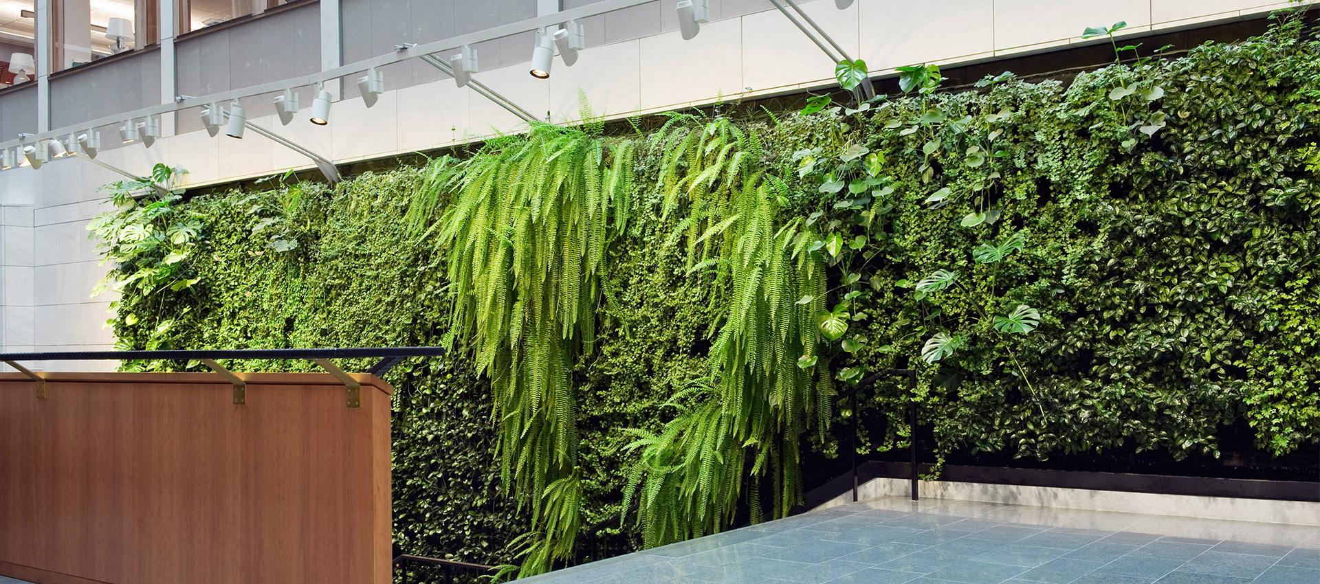 植物墻是怎樣保證存活率的