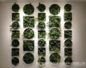 西安建筑科技大学华清广场植物墙