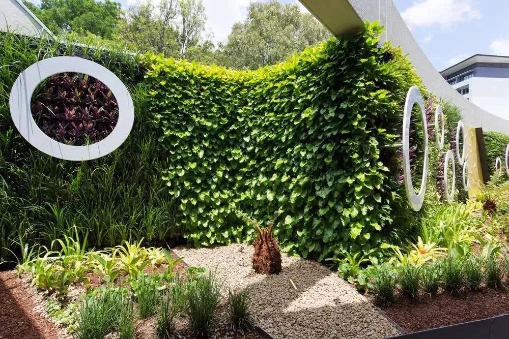 夏季植物墙养护要点,了解一下?