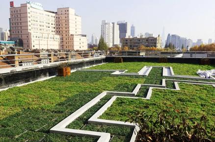 学校屋顶绿化
