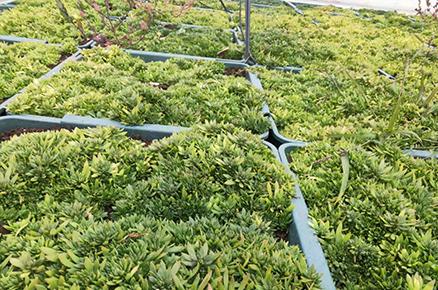 西安高新二十二小屋顶绿化
