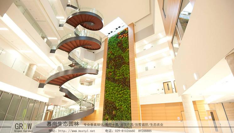 西安生态植物墙