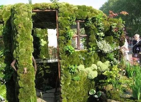 打造植物墙植物是关键,如何选择既美观又实用的植物