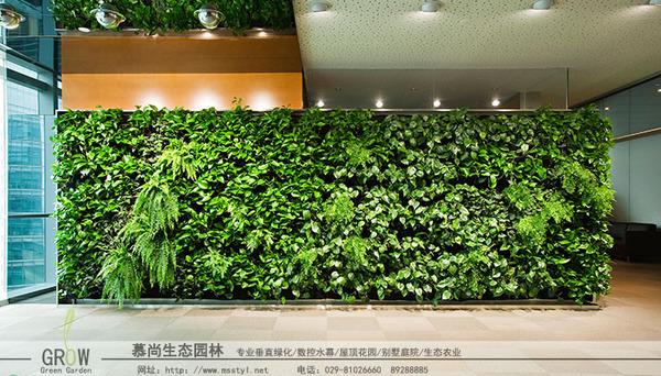 墻面立體綠化
