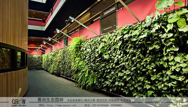 生態植物墻制作