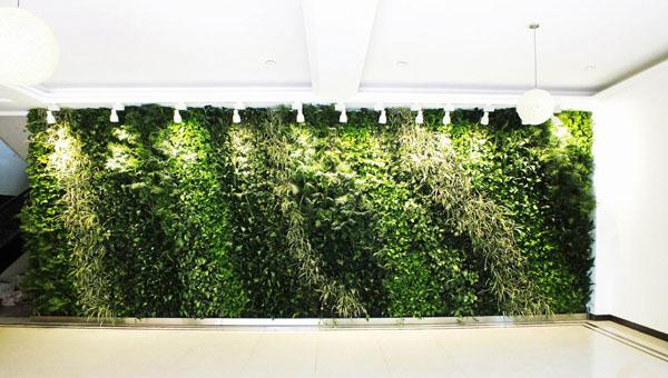想要让室内植物墙更好地绽放生命力,做到这些