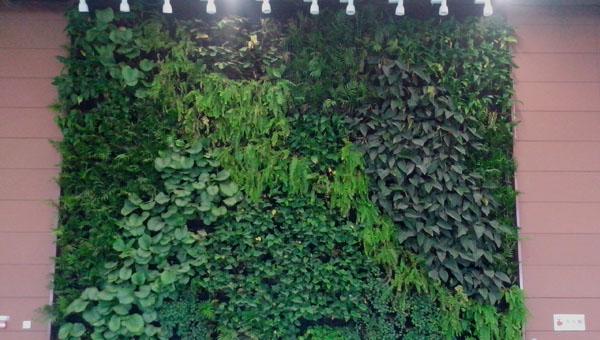 垂直植物墙怎么做?植物墙制作设计方法汇总