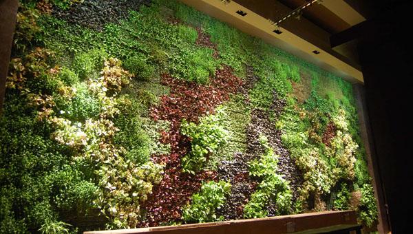 垂直植物墙