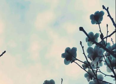 生日关怀|阳春三月,秦垒的祝福,款款深情