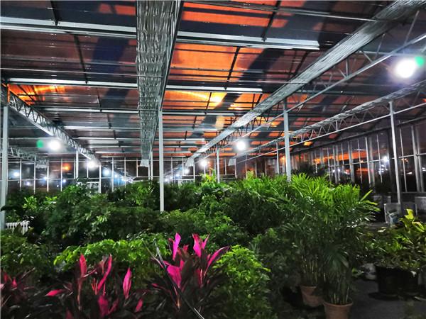 花卉连栋玻璃温室大棚