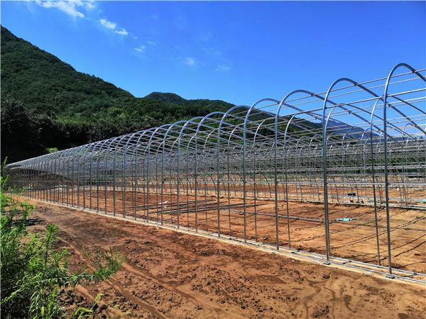 宝鸡市眉县汤峪镇无后墙新型双拱双膜日光温室大棚项目