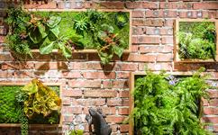 沈阳植物景观,沈阳植物景观厂家,沈阳植物景观价格