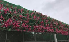 沈阳绿植墙,沈阳绿植墙厂家,沈阳绿植墙制作