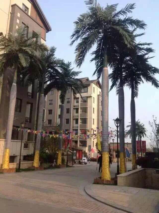 大王椰子假树