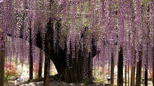 人造藤花树