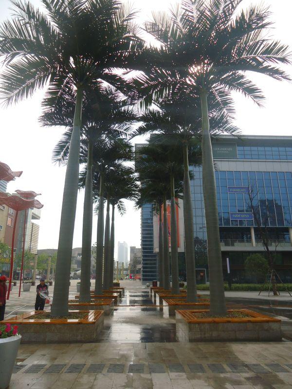 大王椰子仿真树